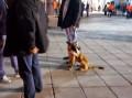 Εκπαιδευμένα σκυλιά στην Τούμπα